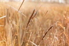 Lever de soleil de vue d'herbe de lac images stock