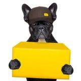 Leveransstolpehund Arkivbild