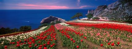 Levers de soleil et couchers du soleil avec des tulipes en Crimée Photo libre de droits