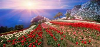 Levers de soleil et couchers du soleil avec des tulipes en Crimée Images libres de droits