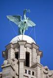 Levervogel op het Koninklijke Levergebouw dat wordt neergestreken royalty-vrije stock foto