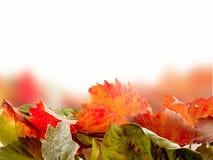 Leves d'automne Photos stock