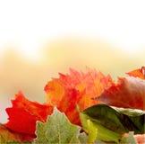 Leves del otoño Fotos de archivo libres de regalías