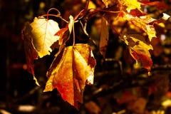 Leves secs d'automne Photos libres de droits