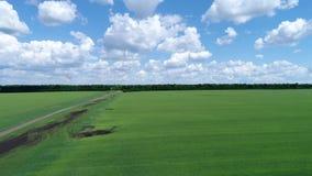 Levez-vous sur le bourdon au-dessus du gisement de céréale vert, Russie clips vidéos