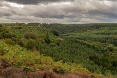 Levisham hed, North Yorkshire, England, UK arkivfoton