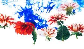 Levitando flores bonitas sob a água Imagem de Stock