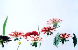 Levitando flores bonitas sob a água Foto de Stock