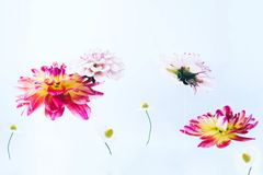 Levitando flores bonitas sob a água Fotos de Stock Royalty Free