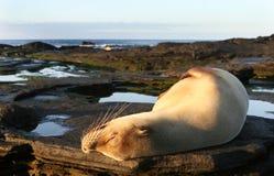 lew łaźni morza słońce zdjęcia royalty free