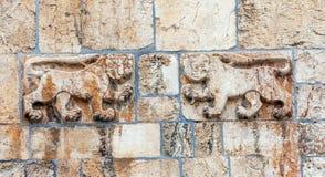 Lew brama, Stara miasto ściana, Jerozolima Zdjęcie Stock