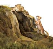 Lew Cubs bawić się na skałach. Lew jama. Fotografia Royalty Free