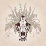 Lew czaszki rocznik Starzejący się upierzenie Obraz Royalty Free