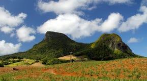 Lew góry Zdjęcie Royalty Free