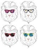 Lew głowy w okularach przeciwsłonecznych Obrazy Royalty Free