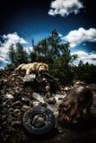 Lew i hipopotam w budynek ruinach Fotografia Stock