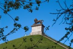 lew jest b wzgórka Waterloo Obrazy Stock