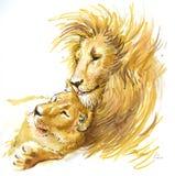 Lew para w miłości ilustracji