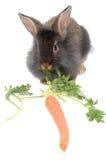lew razem królika jedzenie Zdjęcia Stock
