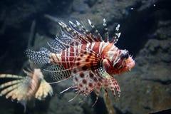 lew ryb Zdjęcie Royalty Free