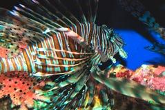 lew ryb Zdjęcia Royalty Free