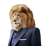 Lew w kostiumu, odosobnionym na białym, biznesowym pojęciu, Fotografia Stock