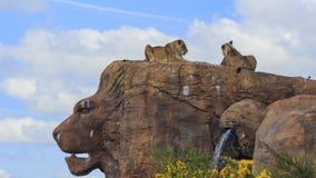 Lew w pięknym Zachodniego Midland safari parku Obrazy Royalty Free
