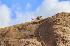 Lew w pięknym Zachodniego Midland safari parku Zdjęcia Royalty Free