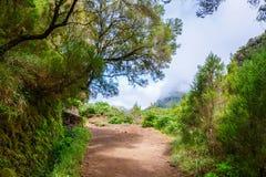 Lewada fa Risco, isola del Madera, Portogallo Immagine Stock