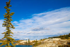 Lewes Lake, Yukon Territories, Canada Royalty Free Stock Image