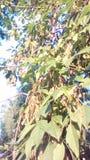 Lewicy drzewne w parkowym lecie i niebieskim niebie zdjęcie stock
