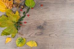 Lewicy rama z jesień tematem Zdjęcie Stock