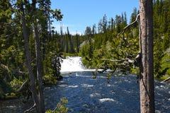 Lewis cai Yellowstone Fotos de Stock