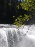 Lewis Falls Foto de Stock