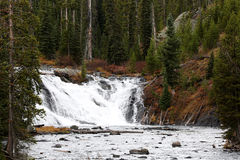Lewis Falls Yellowstone National Park. Lewis Falls waterfall in the Yellowstone National Park Royalty Free Stock Photo