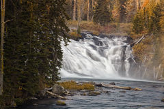 Lewis Falls - Yellowstone nationalpark Royaltyfri Foto
