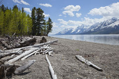 Lewis Lake below Grand Teton mountain range. With trees and driftwood on the shore Stock Image