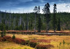 Lewis River During Fall Colors i den Yellowstone nationalparken, Wyo arkivfoton