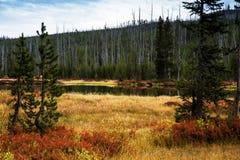 Lewis River During Fall Colors nel parco nazionale di Yellowstone, Wyo Fotografie Stock Libere da Diritti