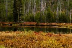 Lewis River During Fall Colors nel parco nazionale di Yellowstone, Wyo Fotografia Stock