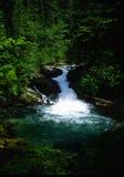 Lewis River Falls Washington Stock Image