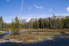 Lewis River at Yellowstone National Park royalty free stock photos