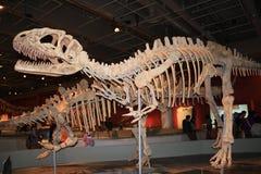 Leyendas de la exposición gigante de los dinosaurios en Hong Kong Foto de archivo libre de regalías