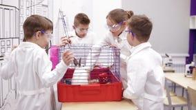 Lezione nella biologia a scuola primaria video d archivio