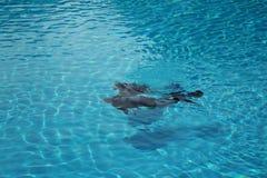 Lezioni di immersione subacquea Fotografie Stock