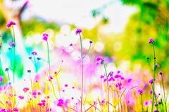 LFair权利迷离焦点桃红色调遣冬天领域室外树flawer庭院五颜六色的绿色自然夏天 库存图片