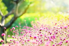 LFair το σωστό θαμπάδων δέντρο χειμερινών τομέων τομέων εστίασης ρόδινο υπαίθριο flawer καλλιεργεί ζωηρόχρωμο πράσινο καλοκαίρι φ Στοκ Εικόνα