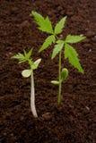 lfie νέα φυτά Στοκ Φωτογραφίες