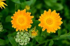 Lflowers Beautifu Стоковые Фотографии RF