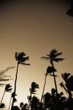 låga palmträd för vinkel Royaltyfria Bilder